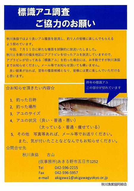 成魚放流のお知らせと標識アユ調査ご協力のお願い
